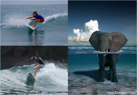 surf without angree the elephants לגלוש בלי לעצבן פילים חחם בר-קיימא סרי לנקה