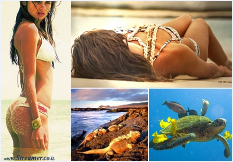 "<font color=""#5b005b""><strong><font color=""#ad00ad"">The 2013 Miss Reef Calendar has visited the mysterious Galapagos Islands</font>,  600 miles off the coast of Ecuador in the Pacific Ocean. The fourth  installment of the Miss Reef Calendar is combining the beauty of nature  with beauty of female. <a href=""http://streamer.co.il/news/view/370/"">Click here to read and watch the clip</a></strong></font>"