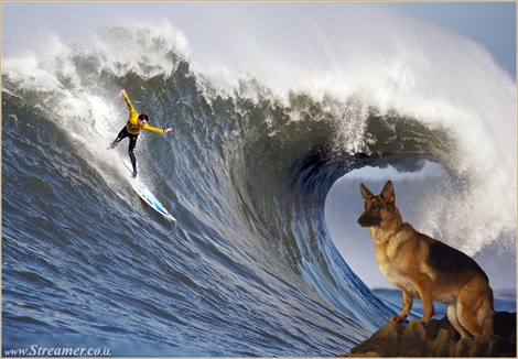 "<font color=""#003366""><strong><font color=""#700000"">Mavericks the DOG...!</font>  The name of surfing spots and beaches is part of the surfers language  and vocabuary. Just like our private names the surfing spots has their  own origin: some of them are named over people and some over pets. <a href=""http://streamer.co.il/articles/view/159/"">click here for further reading</a></strong></font>"