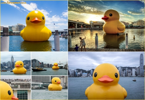 "<font color=""#003366""><strong><font color=""#7a0000"">The cutest duck in the sea / bathtab</font>. &quot;The Rubber Duck knows no frontiers, it doesn't discriminate people and doesn't have a political connotation. The friendly, floating Rubber Duck has healing properties: it can relieve mondial tensions as well as define them&quot;. the giant Rubber Duck created by Dutch artist Florentijn Hofman is cruising all around the world - <a href=""http://streamer.co.il/articles/view/162/"">click here to read</a></strong></font>"