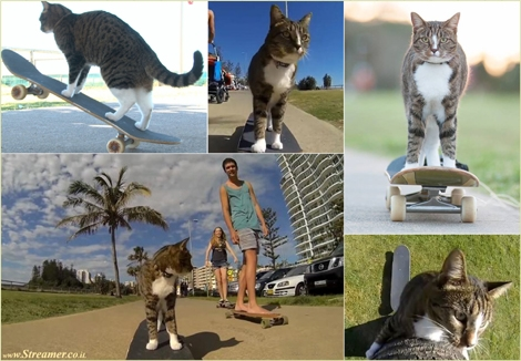"<font color=""#003366""><strong><font color=""#3d0000"">The coolest cat!</font> He's brave as well as talented, </strong><strong>Didga the cat skateboarding through a busy city centre in Australia and even jump  over a Rottweiler on its adventure- <a href=""http://streamer.co.il/clips/view/151"">Click here to watch the clip</a> Miou... </strong></font>"