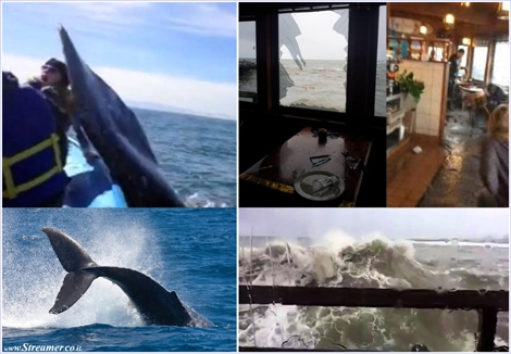 "<strong><font color=""#003366""><font color=""#5b0000"">Wave and Whale tales.</font> On the left captures from a Video of a Whale Slapping Student and on the right Surf's up! A ginat waves smashes a restaurant's window. <a href=""http://streamer.co.il/clips/view/155"">Click here to wacth</a> </font></strong>"