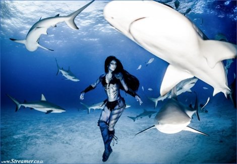 "<font color=""#003366""><strong><font color=""#650000"">Dance with me</font>: Underwater model dances with tiger sharks. Hannah Fraser, an underwater model and activist, has danced with tiger sharks without any protection to raise awareness against the Australian shark cull. <a href=""http://streamer.co.il/news/view/536/"">Click here to read</a></strong></font>"
