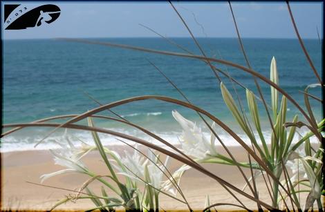 Summer reminder - Blooming beach... stone-masones Aug 07