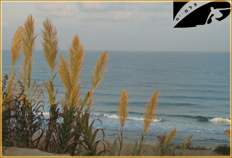 Clean Morning Swell... - Ashqelon sep 07
