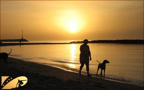 Golden beaches of Israel - mediterranean tresure