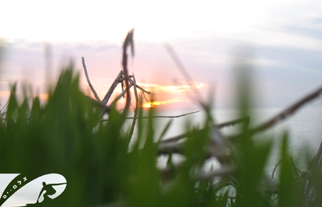Artistic Sunset... through the green collors of grass.  Ashqelon Dec 07