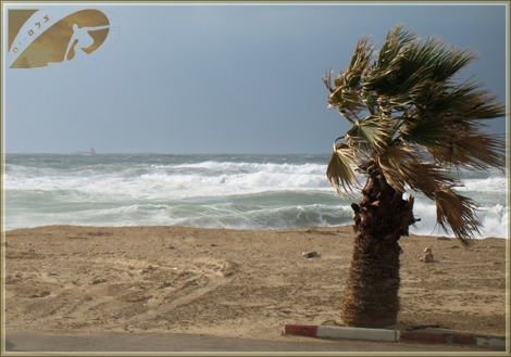 The strong wind shape the ocean floor and the sandy beach - A tree stand strong at Dlila beach Ashqelon Jan 08