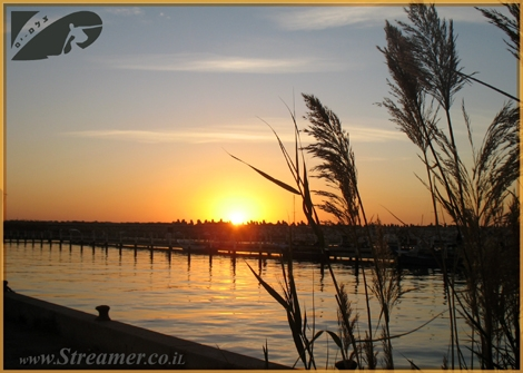 A peacefull moment at the Marina Ashqelon. A golden sun sets behind reed plants. Feb 09