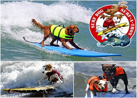 "<font color=""#333333""><strong><font color=""#FF0000"">Doggy Style</font> - The man's best friend is also a good friend of the ocean. The dogs surfing competitions in San-Diego Grip and rip! click here to <a href=""http://streamer.co.il/news/view/257/"">read the barking article</a>...:-)</strong></font>"
