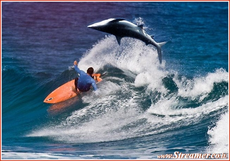 "<div align=""justify""><font color=""#333333""><strong>This photo illustration where the shark is jumping over a surfer looks different in reality but the fear factor remain the same! <a href=""http://streamer.co.il/news/view/263/"">Click here to read the article</a> of a Shark jumping over a surfer in Florida.<br /></strong></font></div>"