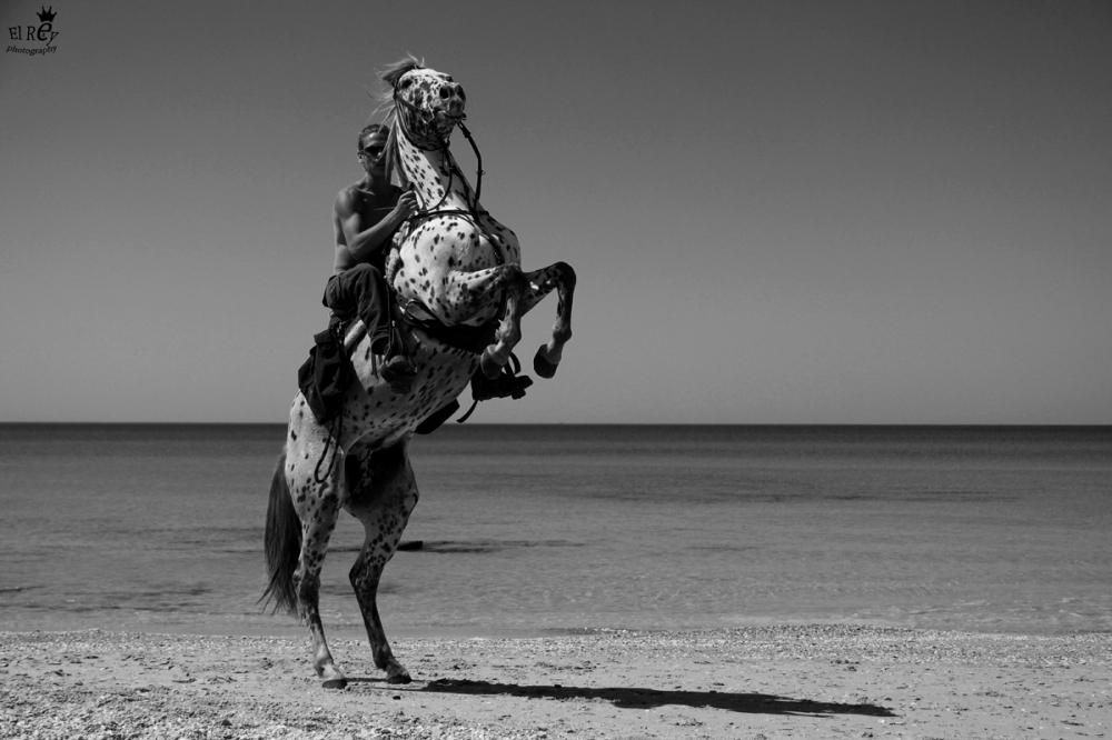 שבוע שמשי ושטוח במהלך החורף. רוכבים על סוסים ולא על גלים. ביקשתי מהרוכב ומסוס האפלוסה שלו שיעשו פוזה מנצחת למצלמה.